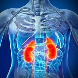 Chronic Kidney Disease Treatment in Ayurveda
