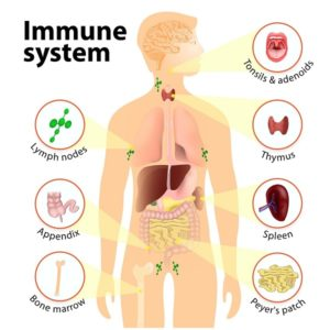 what is immunity